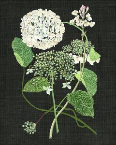 White Hydrangea Study I by Melissa Wang