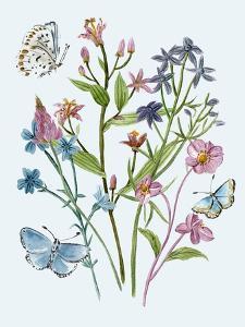 Wildflowers Arrangements I by Melissa Wang