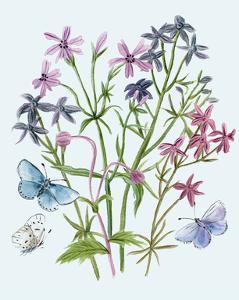 Wildflowers Arrangements II by Melissa Wang