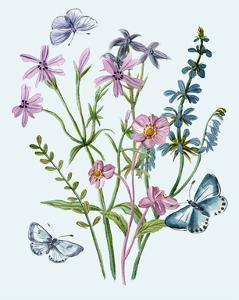 Wildflowers Arrangements IV by Melissa Wang