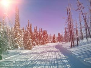 Snowmobile Trail in Labrador Canada by melking