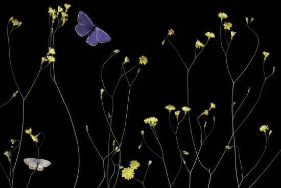 Mellow Flitter-Wild Wonders of Europe-Giclee Print