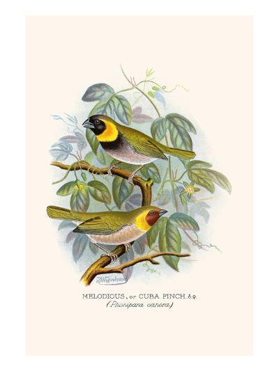 Melodius or Cuba Finch-F^w^ Frohawk-Art Print