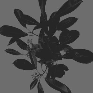 Botanical Light 2 by Melody Hogan