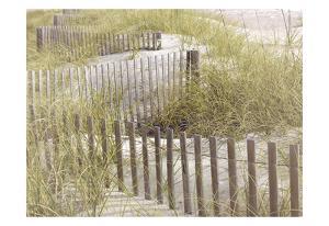 Coastal Photograpy Untextured by Melody Hogan