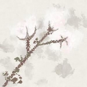 Cotton Boll 3 by Melody Hogan