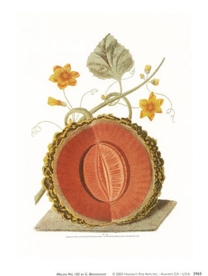 Melon-George Brookshaw-Art Print