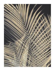 Palm Shadows Cream I by Melonie Miller