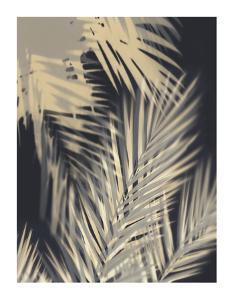 Palm Shadows Cream II by Melonie Miller