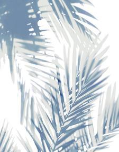 Palm Shadows  II by Melonie Miller