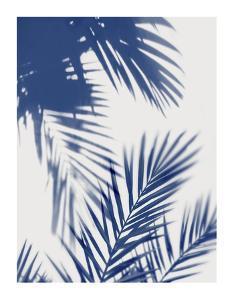 Palm Shadows Indigo II by Melonie Miller