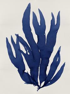 Sea Life - Indigo III by Melonie Miller