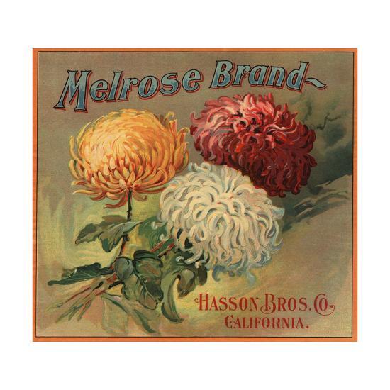 Melrose Brand - California - Citrus Crate Label-Lantern Press-Art Print