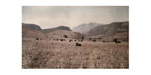 Cattle, Who Will Later Be Given as a Bantu Dowry, Graze in a Field by Melville Chater