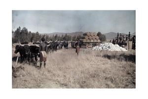 Swaziland Natives Stamp Cotton into Bales by Melville Chater