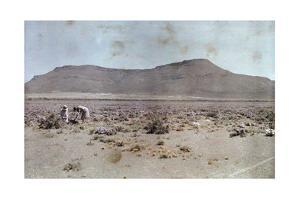 Women Pick Flowers in the Usually Barren Desert by Melville Chater