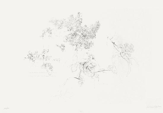 Membrillos y rosa-Antonio Lopez Garcia-Limited Edition