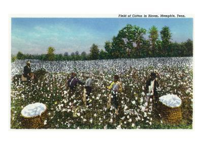 Memphis, Tennessee - View of a Field of Cotton in Bloom, Cotton Workers, c.1942-Lantern Press-Art Print
