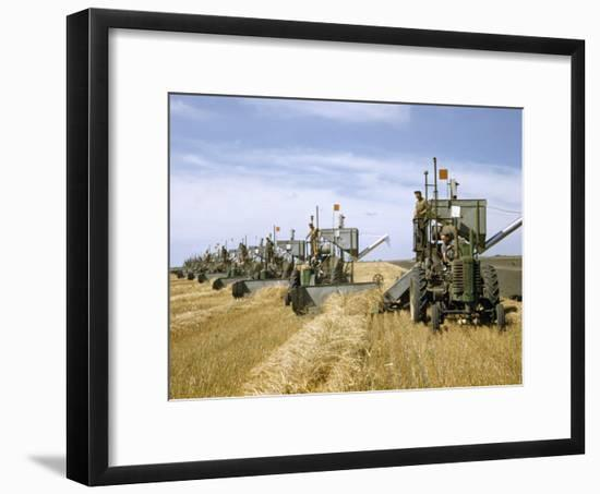 Men Drive Combines in Diagonal Line Through Golden Grain Fields-Jack Fletcher-Framed Photographic Print