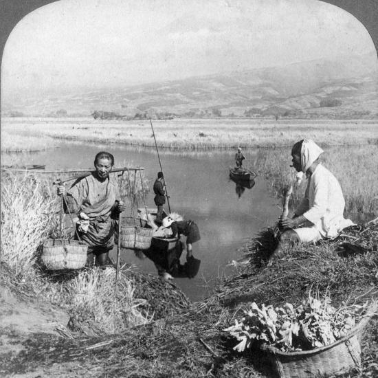 Men Gathering Rushes Near Suzukawa, Fujiyama, Japan, 1904-Underwood & Underwood-Photographic Print