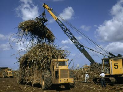 Men Watch Crane with Grab Attachment Load Sugar Cane into Hauler-W^ Robert Moore-Photographic Print