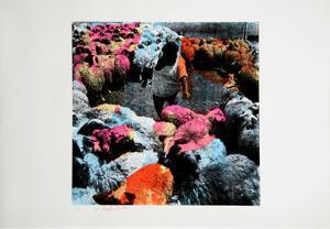 Untitled - Circle of Sheep by Menashe Kadishman