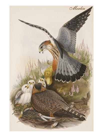 Merlin-John Gould-Art Print