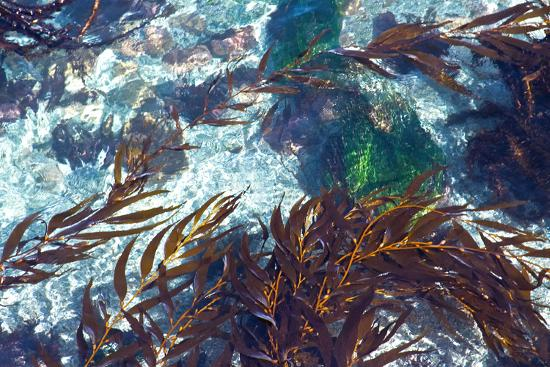 Mermaid Tresses I-Rita Crane-Photo
