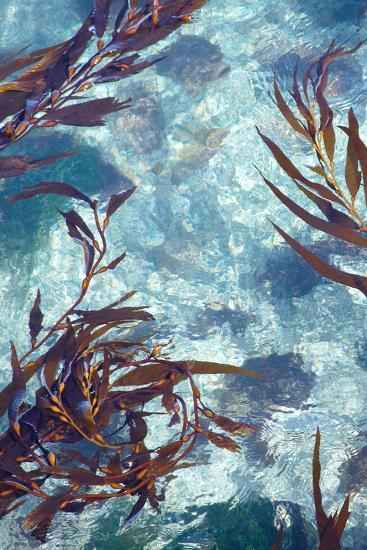 Mermaid Tresses IV-Rita Crane-Photo