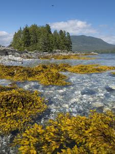 Canada, British Columbia, Pacific Rim National Park. Broken Islands Marine Park, kelp by Merrill Images