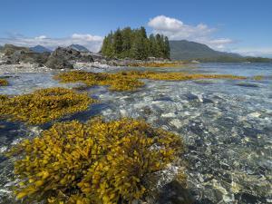 Canada, British Columbia, Pacific Rim National Park. Broken Islands Marine Park by Merrill Images