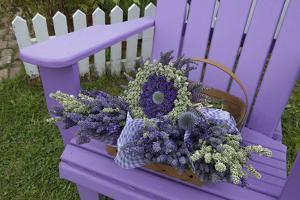 Dried Lavender on Purple Chair at Lavender Festival, Sequim, Washington, USA by Merrill Images