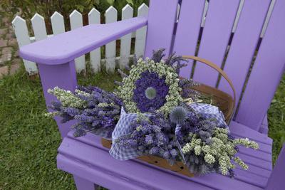 Dried Lavender on Purple Chair at Lavender Festival, Sequim, Washington, USA