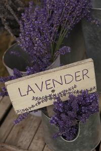 Farm Sign with Dried Lavender for Sale at Lavender Festival, Sequim, Washington, USA by Merrill Images