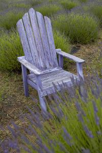 Garden, Adirondack Chair and Straw Hat, Lavender Festival, Sequim, Washington, USA by Merrill Images