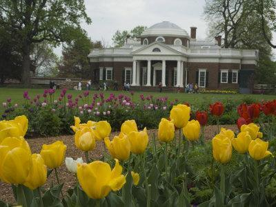 Tulips in Garden of Monticello, Virginia, USA