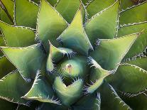 Ferns, Hoh Rain Forest, Olympic National Park, Washington, USA-Merrill Images-Photographic Print