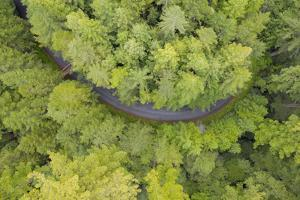 Usa, California, Orick. Highway in middle of forest (aerial view). by Merrill Images