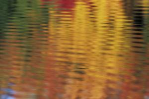 Usa, Massachusetts, Acton. Reflection of autumn foliage in pond with ripples. by Merrill Images