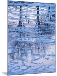 Usa, Vermont, Burlington. Ice and tree reflections in frozen Lake Champlain. by Merrill Images