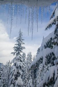 Usa, Washington State, Crystal Mountain. Icicles and snow-covered trees, viewed through window by Merrill Images