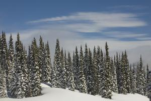 Usa, Washington State, Crystal Mountain. Snow-covered trees and edge of ski run. by Merrill Images