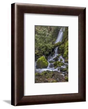 Merriman Falls in the Olympic National Forest, Washington State, USA-Chuck Haney-Framed Photographic Print