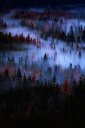 Mesmer Portrait Fog & Light Trees Sark Yosemite Winter Storm Valley-Vincent James-Photographic Print