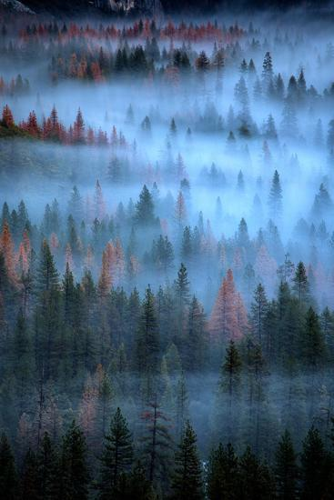 Mesmerizing Fog and Trees, Yosemite Valley, National Parks, California-Vincent James-Photographic Print