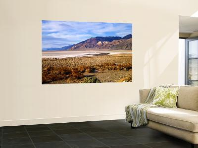 Mesquite and the Black Mountains of the Amaragosa Range, Death Valley National Park, CA-Bernard Friel-Wall Mural