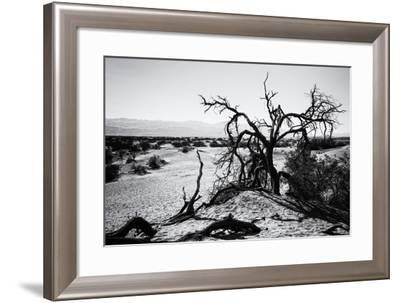 Mesquite Flat Sans Dunes - Stovepipe wells village - Death Valley National Park - California - USA -Philippe Hugonnard-Framed Photographic Print