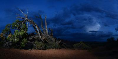 Mesquite Tree in Stormy Weather at Arches National Park-Raul Touzon-Photographic Print