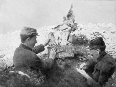 Messenger Pigeons Being Released at the Front Line, World War I, 1915--Giclee Print