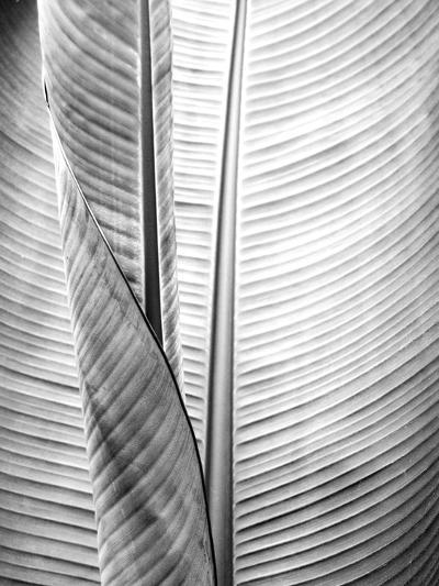 Metal BW Plant 1-Kimberly Allen-Art Print
